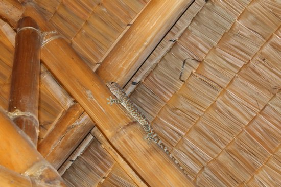 El Dorado Beach Resort: a visitor in our room