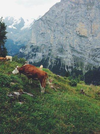 Hotel Eiger: Walkin' around town