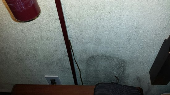 Quality Inn: Mold behind the night stand