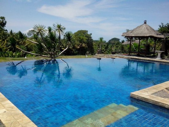 Bumi Ubud Resort: pool with a view