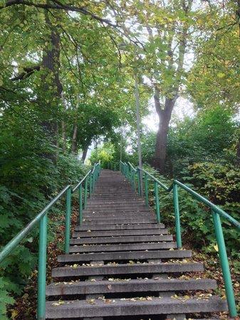 Sugihara House: こんな階段を登ります