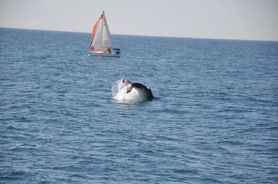 Tallship Island Adventures: Whale Tail
