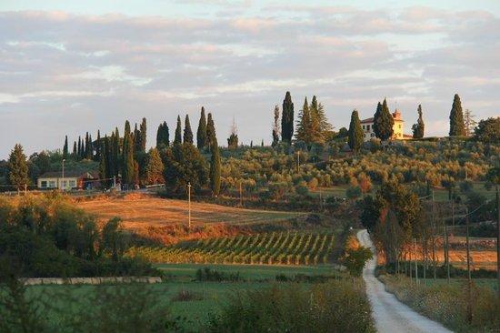 Le Pietre Vive di Montaperti: Vista da fazenda e estrada de acesso