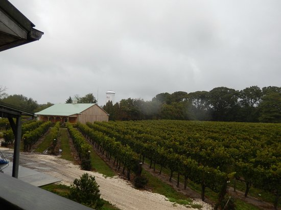 Cape May Winery : view from outdoor (partially covered) deck