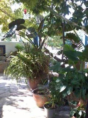 Villa Mozart y Macondo: Patio desayunador