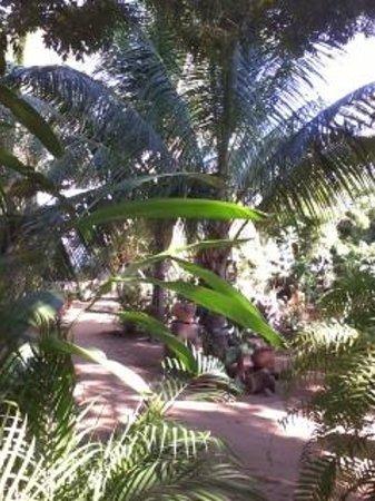 Villa Mozart y Macondo : Jardin