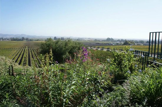 Healdsburg Area Winery Tours: great views from Gloria Ferrer