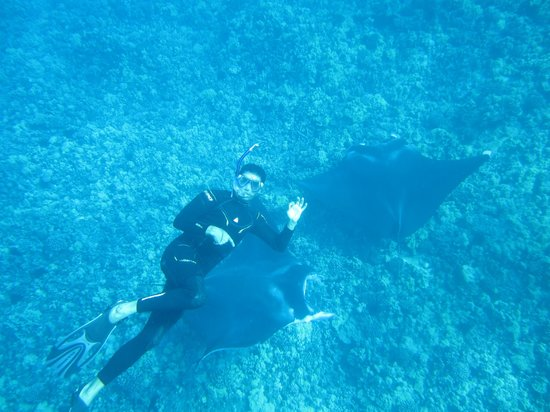 Dolphin Essence: Mantas at cleaning station