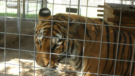 Greater Wynnewood Exotic Animal Park: .