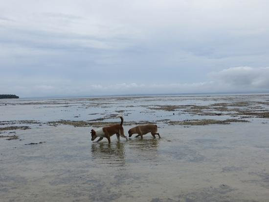 Caqalai Island Resort: dogs of caqalai