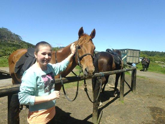 Muriwai Beach Horse Treks: look at us,  so pretty