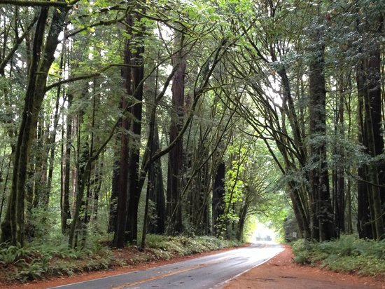 Jedediah Smith Redwoods State Park : Driving through a canopy of Redwoods