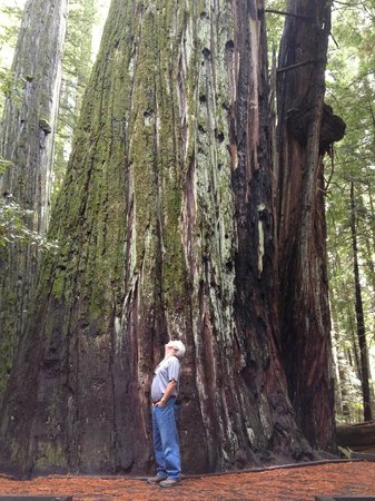 Jedediah Smith Redwoods State Park : Now that's a really big tree!