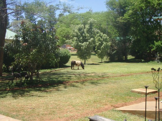 Kilimanjaro Country Lodge: pony in the garden