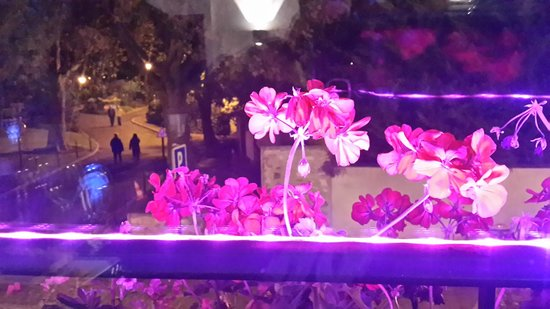 Bistrot la Vitrine: Window view at night