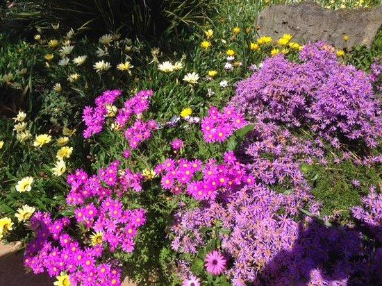 Auckland Botanic Gardens: 春の花