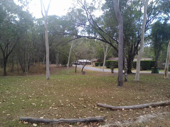 BIG4 Airlie Cove Resort & Caravan Park : shady sites