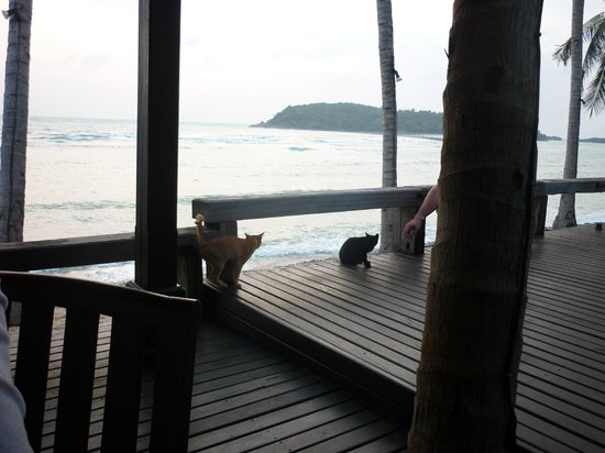 Nora Beach Resort and Spa: Breakfast area with some kitty visitors