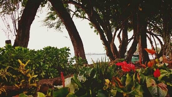 Aloha Mixed Plate: nice view
