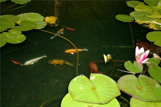 Le Mas de la Cigale Bleue : Peaceful zen pond