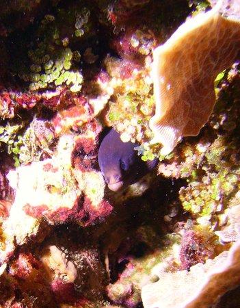 Roatan Eco Tour. Snorkeling Tours: Eel