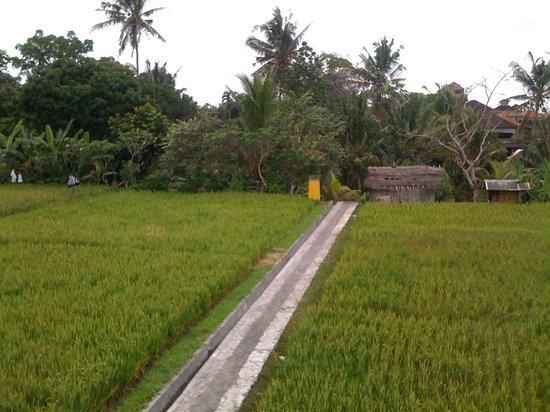 Bayu Guest House: View from Breakfast Balcony