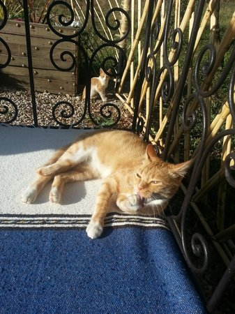 La Perle d'Azrou : Tumbonas en el jardín con los gatitos trepando por los melocotoneros
