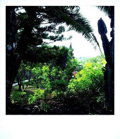 Les Terrasses: Gardens
