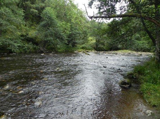 Plodda Falls : Plodda River
