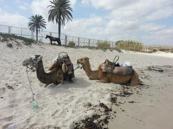 Hotel Abou Sofiane: beach transport....