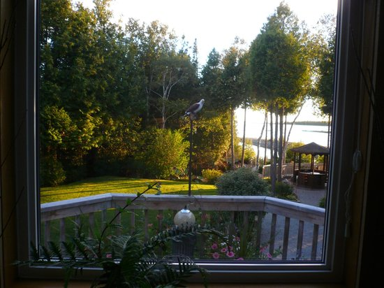 Bear Cove Bed and Breakfast: back garden