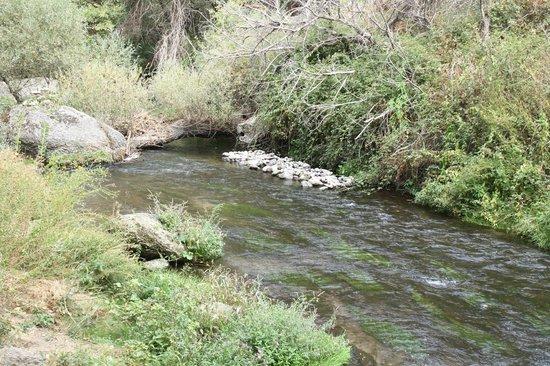 Ihlara Valley: Stream flowing through the forest