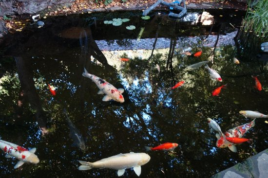 Harvest Inn by Charlie Palmer: Harvest Inn Koi pond