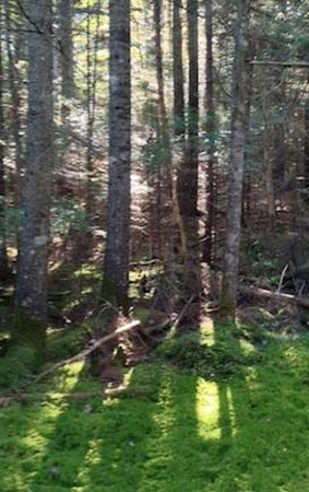 Ellsworth, ME: On one of many trails on the 200 acres.