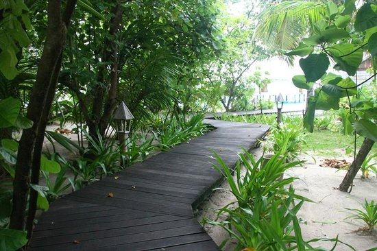 Gangehi Island Resort: Trestle in the jungle