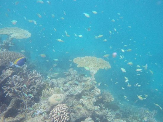 Gangehi Island Resort: Colorful fish and coral