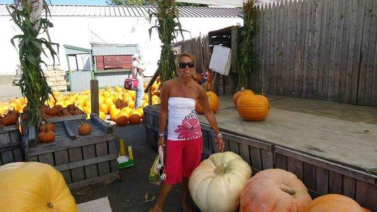 Applecrest Farm Orchards: With a big pumpkin