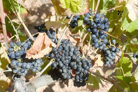 Vin en Vacances - Day Tours : Grapes