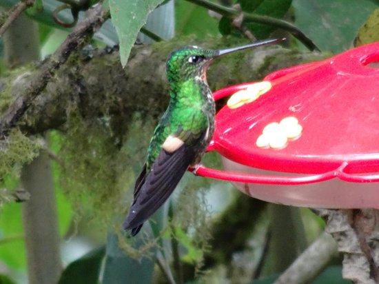 San Jorge Eco-Lodge & Botanical Reserve: Hummingbirds abound!