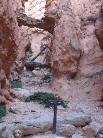 Natural Bridges along Navajo Trail