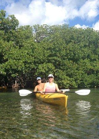 Lazy Dog Adventures: Kayaking thru the mangroves with Lazy Dog Tours