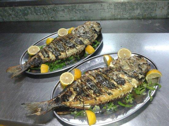 Amalthia: Fish Guf