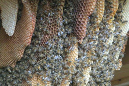 Quince Honey Farm: 22