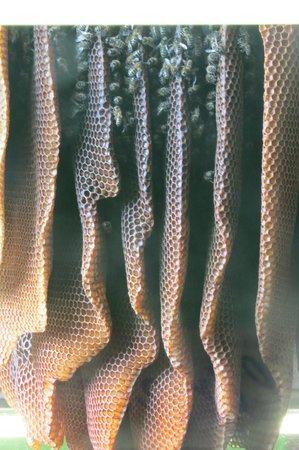 Quince Honey Farm: 15