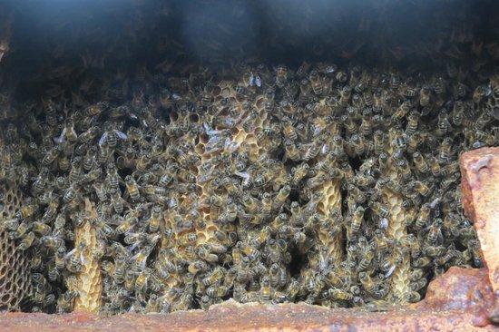 Quince Honey Farm: 11