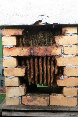 Quince Honey Farm: 2