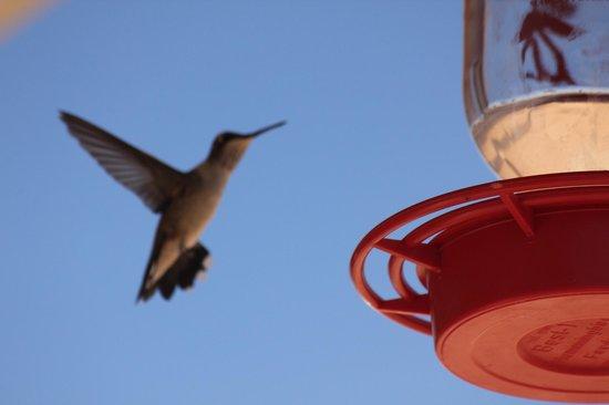 Bullberry Inn B&B: Hummingbirds entertained us from the breakfast room