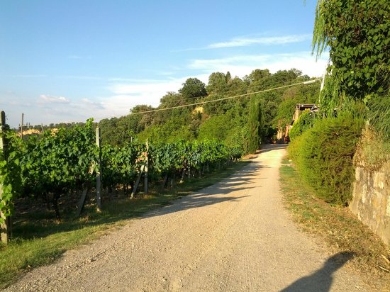 Agriturismo La Pietriccia : vigneto