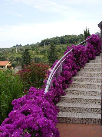 Hotel Metropol : Blumen 1