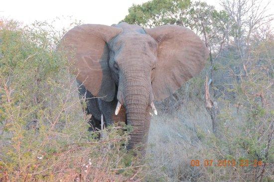 nThambo Tree Camp: elephant